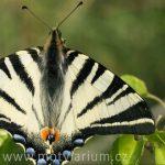 Tip na výlet: Motýlárium ve Voticích
